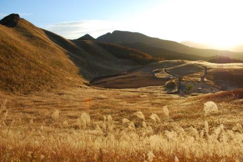 [10-11月]黄金のススキが美しい秋景色